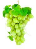 在白色背景隔绝的新束绿色葡萄 免版税图库摄影