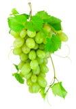 在白色背景隔绝的新束绿色葡萄 库存照片