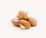 在白色背景隔绝的新鲜的棕色蘑菇蘑菇 免版税库存照片
