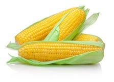 在白色背景隔绝的新鲜的玉米棒子 免版税库存照片