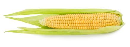 在白色背景隔绝的新鲜的玉米 库存图片
