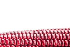 在白色背景隔绝的新鲜的红颜色玉米 免版税图库摄影
