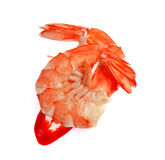 在白色背景隔绝的新鲜的虾 库存图片