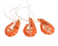 在白色背景隔绝的新鲜的虾 免版税库存图片