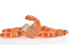 在白色背景隔绝的新鲜的虾 图库摄影