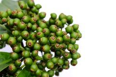 在白色背景隔绝的新鲜的绿色果子 库存图片