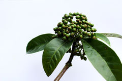 在白色背景隔绝的新鲜的绿色果子 免版税库存照片