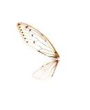 在白色背景隔绝的昆虫蝉 库存图片