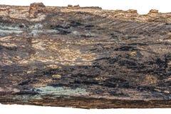 在白色背景隔绝的木木材朽烂 免版税图库摄影