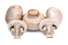 在白色背景隔绝的未加工的蘑菇 免版税库存照片