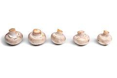 在白色背景隔绝的未加工的蘑菇 库存图片