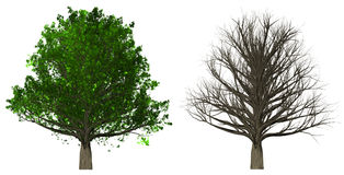 在白色背景隔绝的树, 3D例证 库存照片
