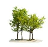 在白色背景隔绝的树 免版税库存照片
