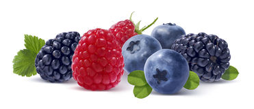 在白色背景隔绝的森林莓果 免版税库存图片