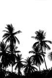 在白色背景隔绝的椰子树叶子 库存图片