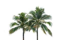 在白色背景隔绝的椰子树绿色叶子 免版税库存照片