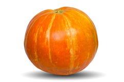 在白色背景隔绝的橙色南瓜 库存照片