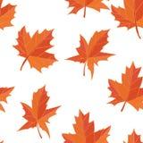 在白色背景隔绝的橙黄色下落的秋叶 免版税库存图片
