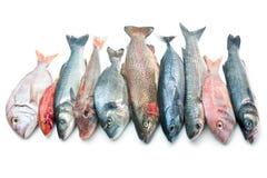 在白色背景隔绝的海鲜 免版税库存照片