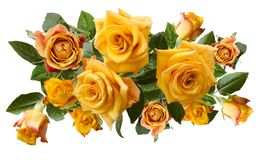 在白色背景隔绝的淡黄色橙色玫瑰美丽的花束  库存照片