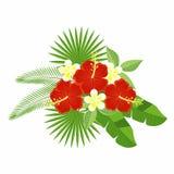 在白色背景隔绝的热带花和叶子花束  木槿和羽毛,棕榈叶, monstera花  库存图片
