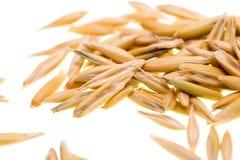 在白色背景隔绝的燕麦五谷  免版税库存图片