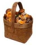 在白色背景隔绝的狂放的蘑菇篮子  免版税库存照片