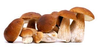 在白色背景隔绝的狂放的被搜寻的蘑菇选择,与阴影 牛肝菌蕈类可食蘑菇 免版税库存图片