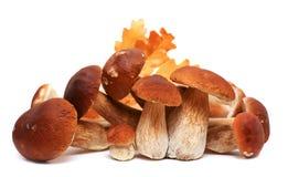 在白色背景隔绝的狂放的被搜寻的蘑菇选择,与阴影 牛肝菌蕈类可食蘑菇 免版税库存照片