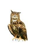 猫头鹰 库存照片