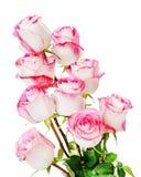 从在白色背景隔绝的玫瑰的五颜六色的花花束 库存图片