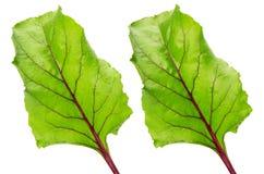 在白色背景隔绝的甜菜叶子 免版税库存图片