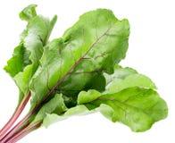 在白色背景隔绝的甜菜叶子 免版税库存照片