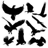 在白色背景隔绝的白头鹰剪影 库存例证