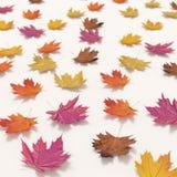 在白色背景隔绝的秋天落的叶子 免版税图库摄影