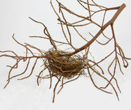在白色背景隔绝的空的鸟巢 免版税库存照片