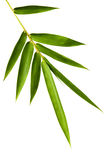 被隔绝的竹子叶子 免版税库存图片