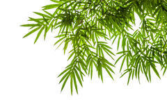 在白色背景隔绝的竹子叶子,裁减路线包括 库存照片