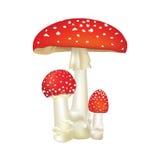 在白色背景隔绝的红色毒物蘑菇。 免版税库存照片