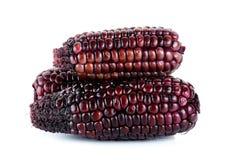 在白色背景隔绝的红色玉米 图库摄影