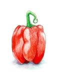 在白色背景隔绝的红色甜椒手拉在色的铅笔 库存图片