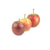 在白色背景隔绝的红色黄色三苹果 免版税库存图片