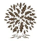 在白色背景隔绝的美丽的棕色橡木树剪影 库存图片