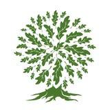 在白色背景隔绝的美丽的绿色橡树剪影 免版税库存图片