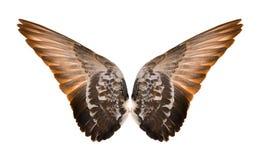 在白色背景隔绝的翼 图库摄影