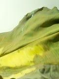 在白色背景隔绝的老香蕉叶子 库存照片