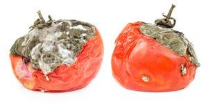 在白色背景隔绝的腐烂的蕃茄 图库摄影