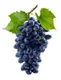 在白色背景隔绝的蓝色葡萄束 免版税库存照片