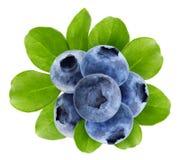 在白色背景隔绝的蓝莓 免版税库存图片