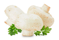 在白色背景隔绝的蘑菇 库存照片